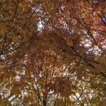 scott-kleinberg-autumn
